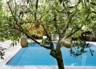 piscine_pool_olives